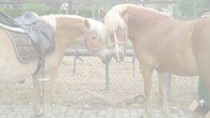 Pferde von Monikas Ferienhof