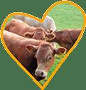 Kühe auf Monikas Ferienhof