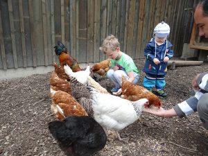 Urlaub auf dem Bauernhof mit Tieren wie Hühnern auf Monikas Ferienhof