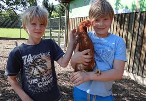 Abenteuerurlaub für Kinder Hühner Bauernhof