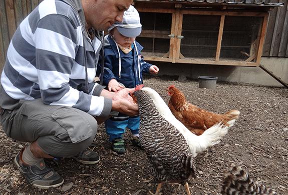 Hühner füttern im Sauerland auf Monikas Ferienhof
